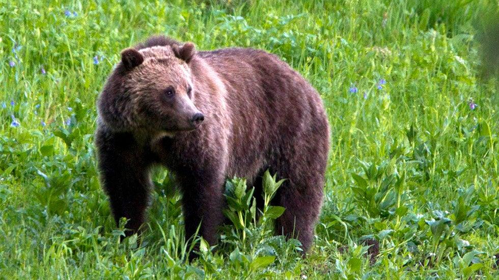 Weekend Adventure: Bear Safety