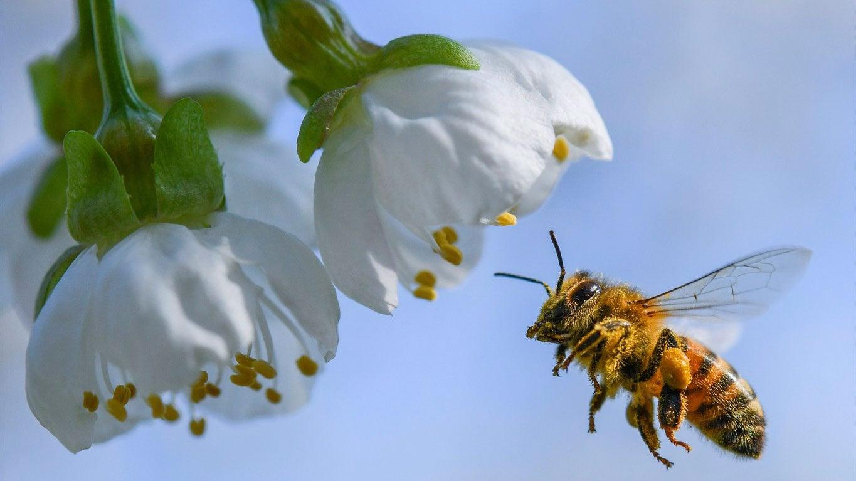 Honeydew California Weather
