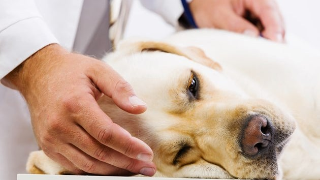 Deadly dog disease Alabama Rot is sweeping Britain - here are the symptoms to look out for
