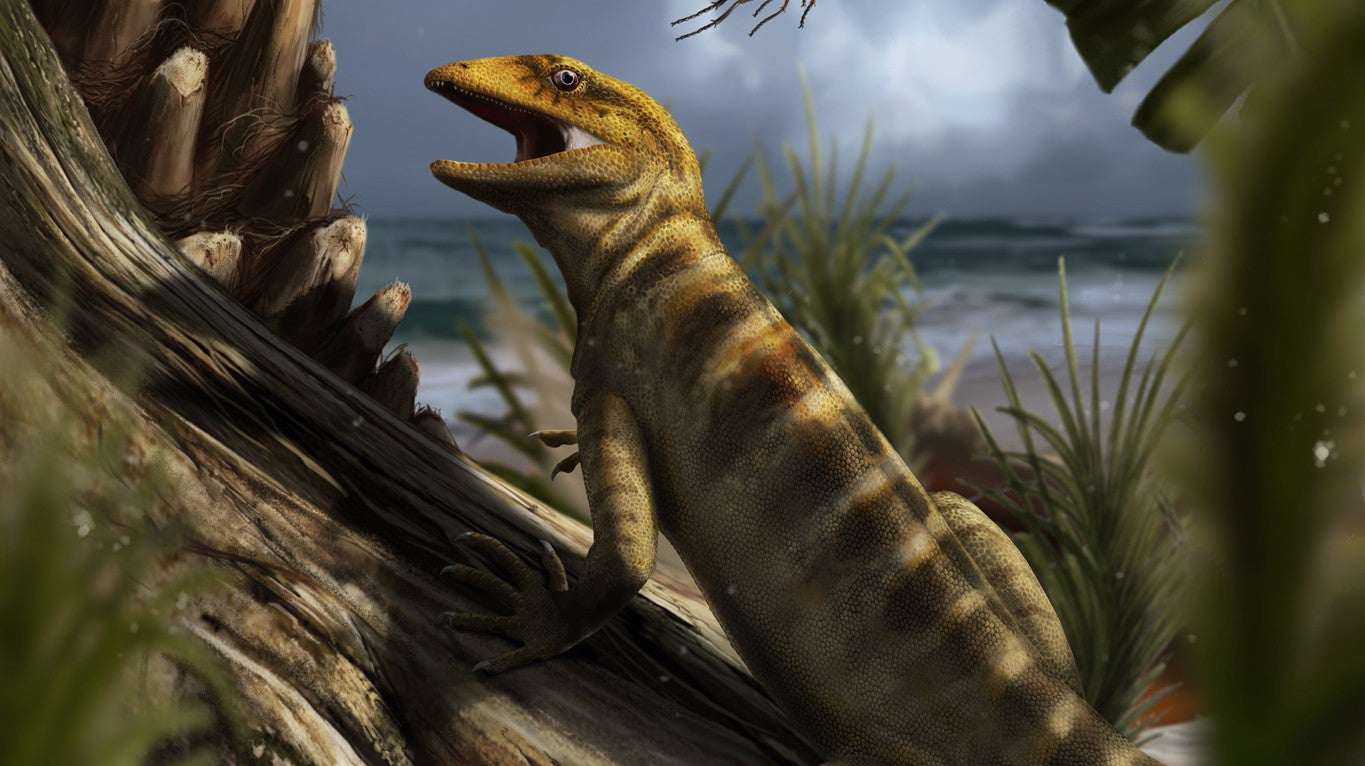 Scientists Identify World's Oldest Lizard Fossil, 240 Million Years Old