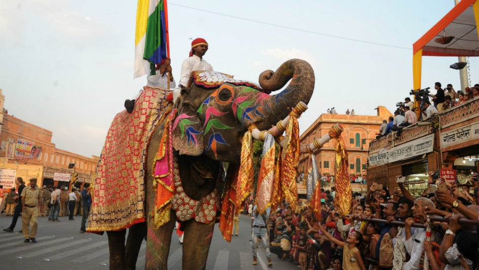 Court Pulls Up Rajasthan Govt. For 'Cruel, Illegal' Elephant Rides