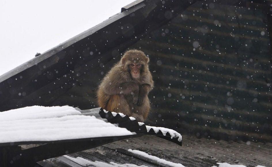 FOTOS: La nieve acaba con la sequía en Cachemira