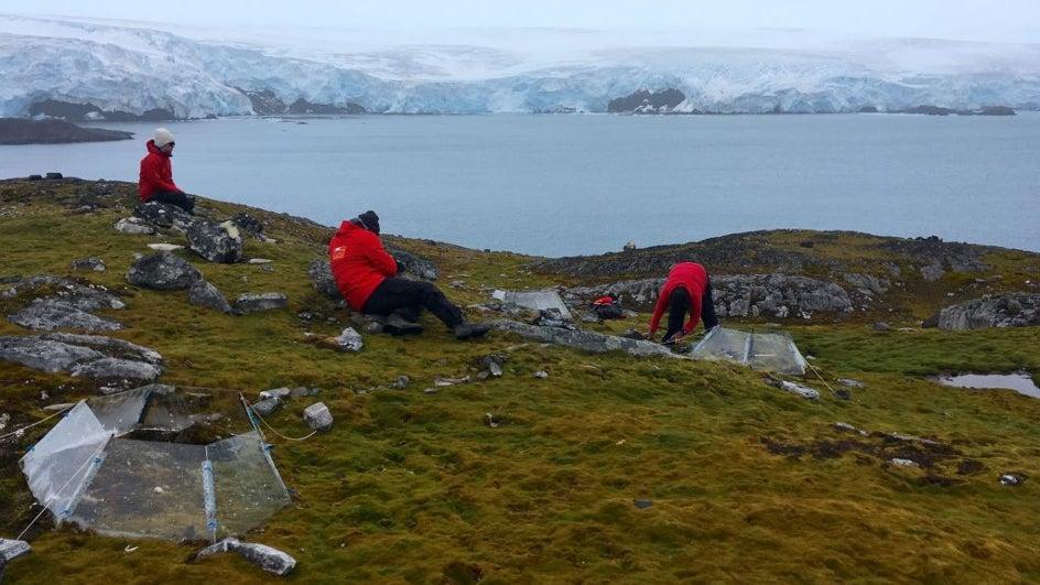 Diez años decisivos para preservar la Antártida