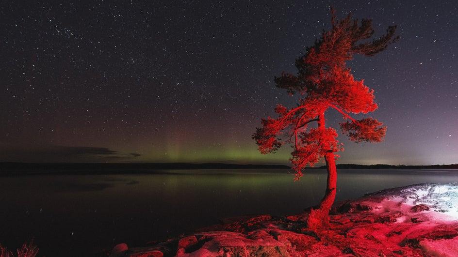 Los árboles recuerdan las auroras de sangre de hace mil años
