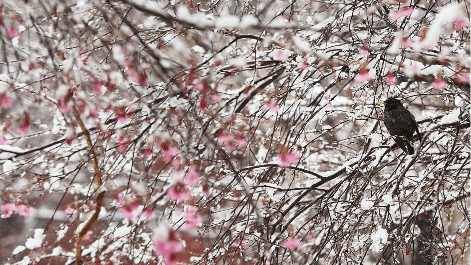 Primavera blanca en Nueva York