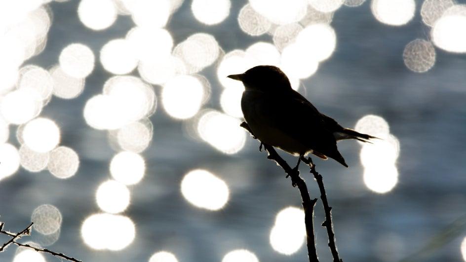 El cambio climático pone en jaque a aves migratorias