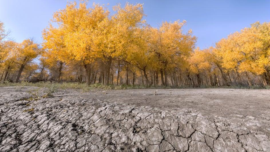 Los años secos incrementan el dióxido de carbono en el aire