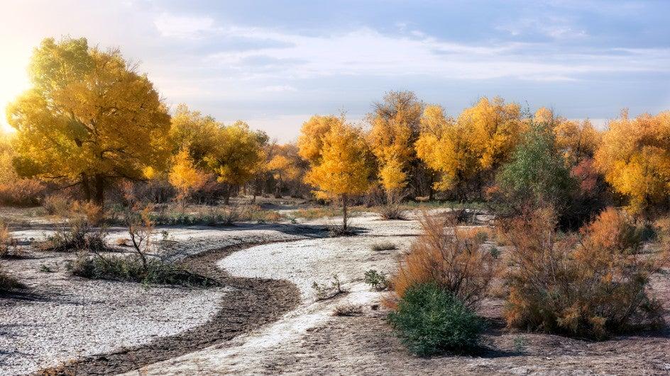 La resistencia a la sequía aumenta con la variedad de los árboles