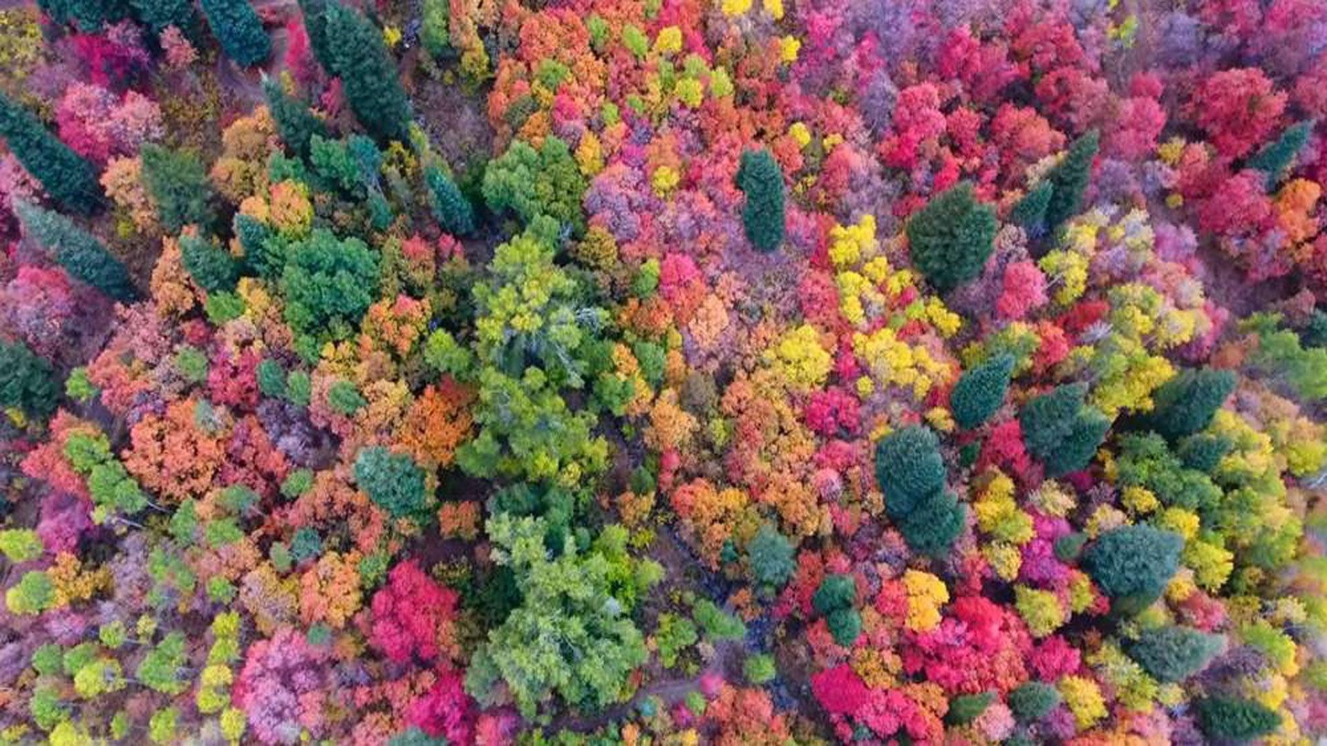 foto de VIDÉO Avec son drone, il capture l'arrivée de l'automne dans une ...