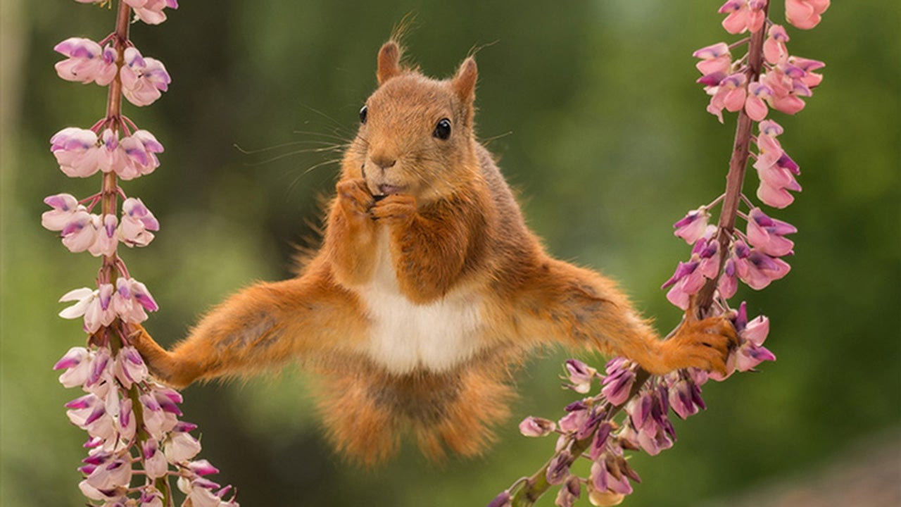 Sneak Peek: 2018 Comedy Wildlife Photography Awards Mid-Contest Entries Have Been Released (PHOTOS)