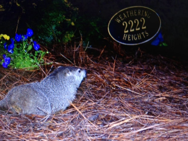 Groundhog Day 2013: The Groundhogs Disagree!