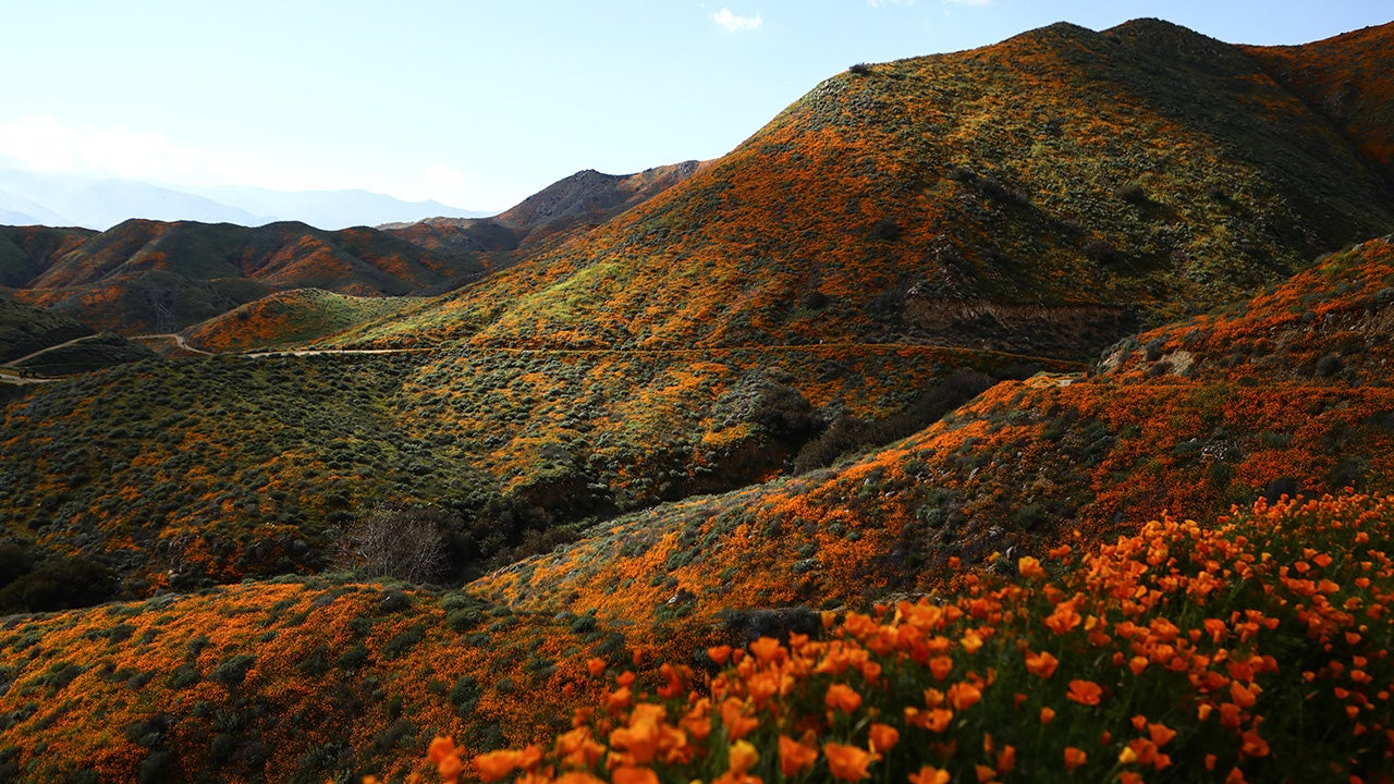 Mother Nature's Super Bloom Flower Show (PHOTOS)