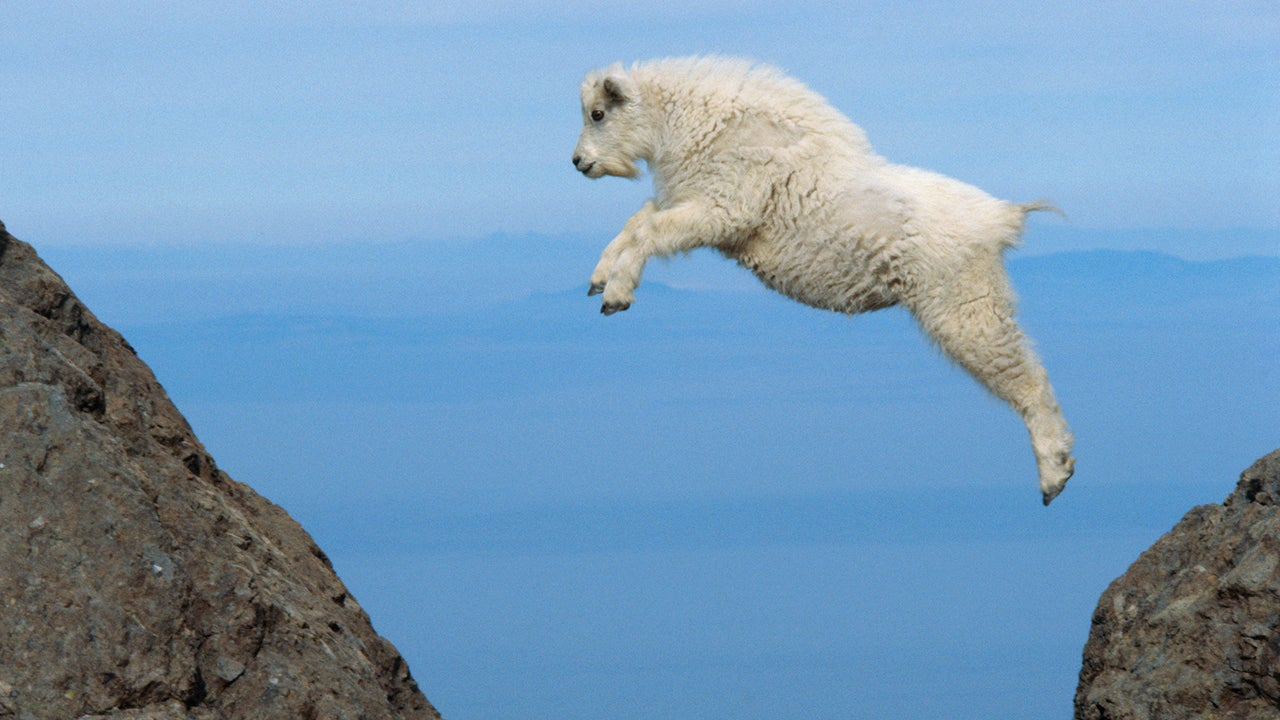 Mountain Goats: How Do They Do It? (PHOTOS)