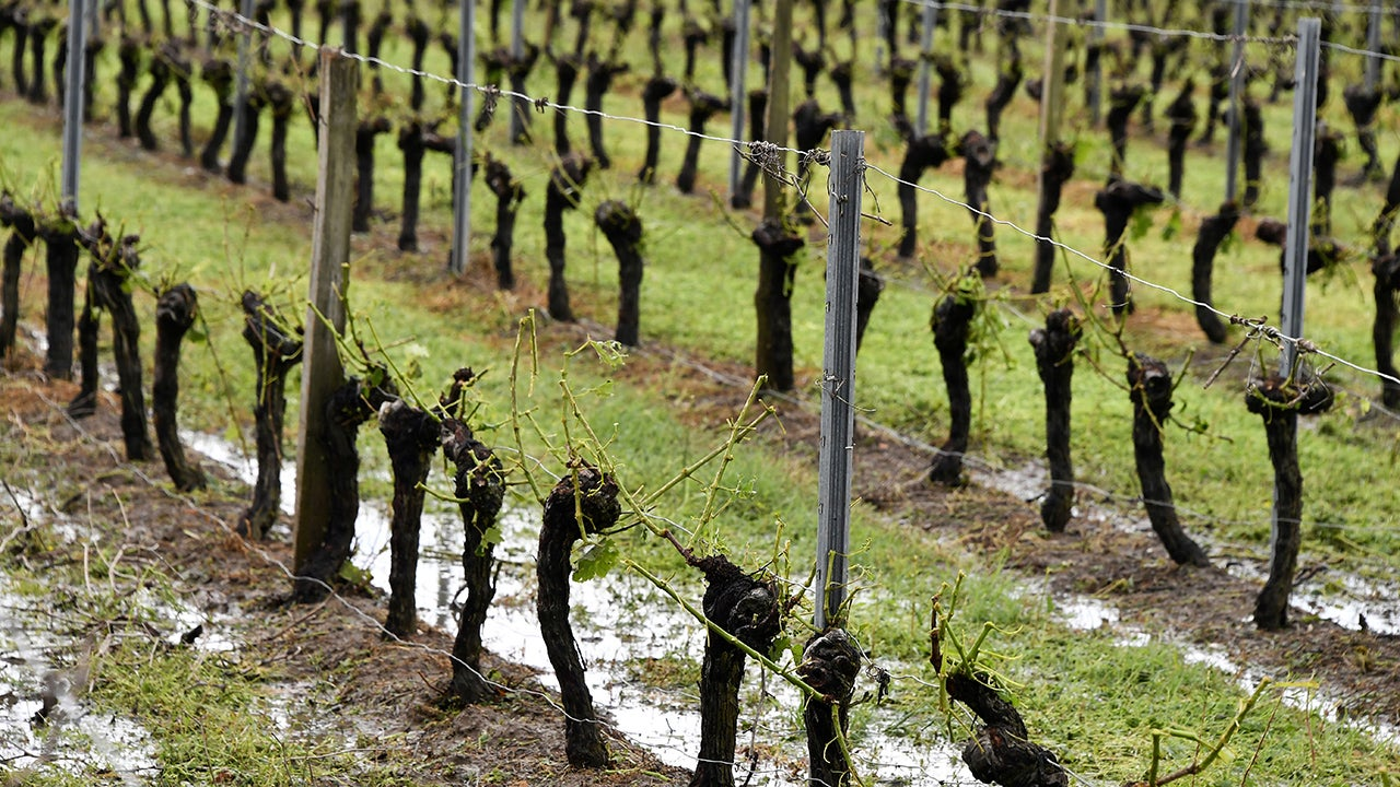 Hail Destroys More Than Eight Million Bottles' Worth of Wine in France (PHOTOS)
