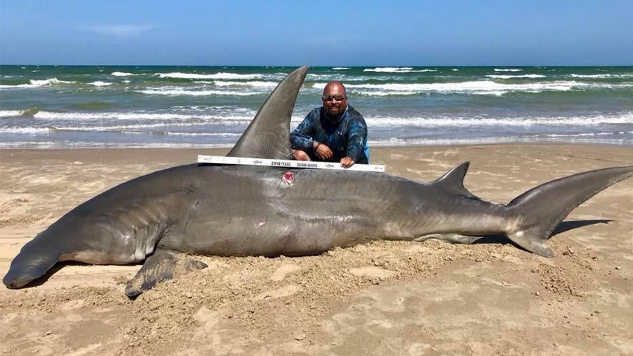 Texas Fisherman Reels in Massive 14-Foot Hammerhead Shark