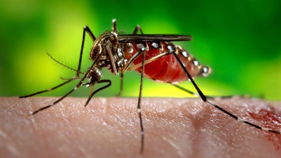 Monsoon Ailments Claim 19 in Mumbai; Leptospirosis is Biggest Killer