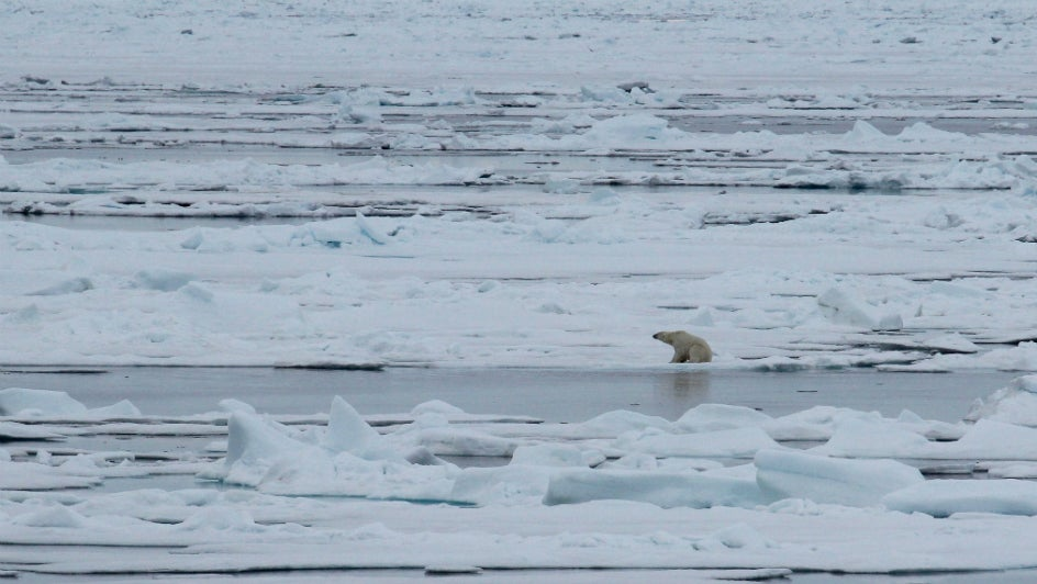 Winter Ice Thickening Is Faster than Before in Arctic, but Not Enough to Overcome Melting: NASA