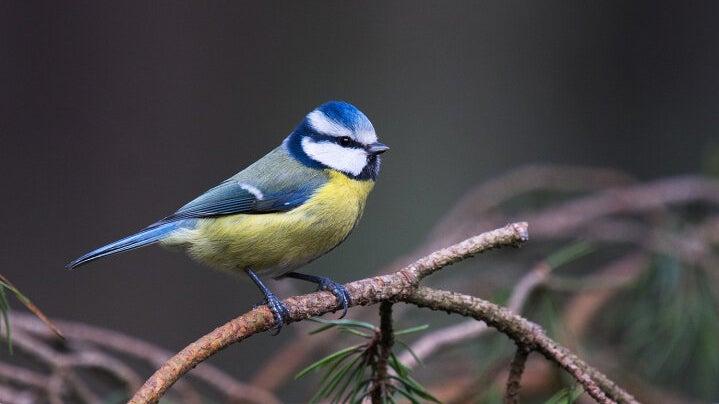 Avian Radiators: Study Explains How Birds' Blood Keeps Them Warm on Cold Winter Nights