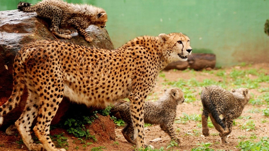 Three Animal Species Extinct in India Due to Desertification, More to Follow: Expert