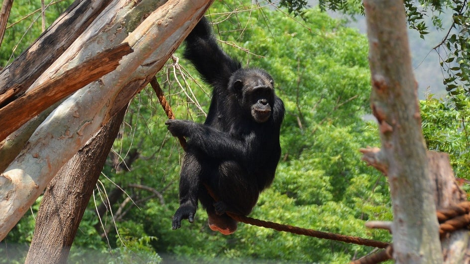 Understand Animal Behaviour to Aid Conservation: Novel Proposal at CMS COP13