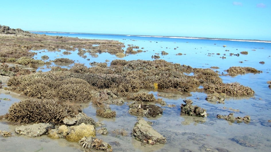 Researchers have come up with a novel method to restore degraded reefs in cooler parts of the world: assisted migration. A recent study, published in Nature Communications on Tuesday, provides a rationale for human-assisted dispersal of heat-resistant corals to cooler, degraded reefs to restore the lost ecosystem.