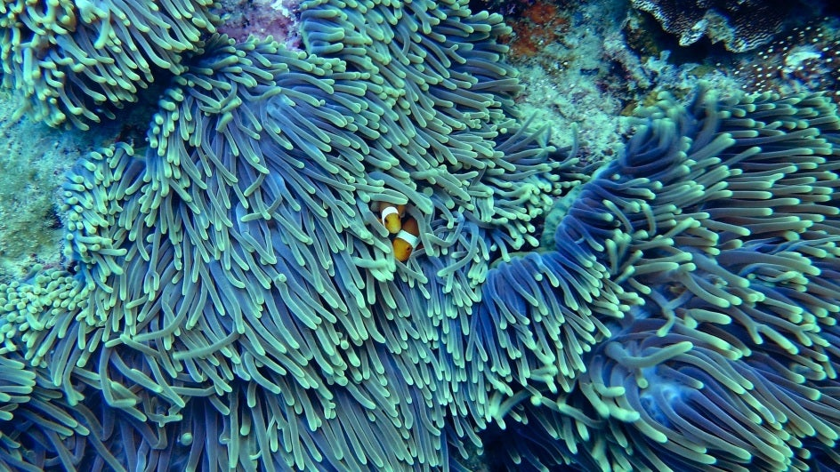 Coral Reefs in India Have Undergone Three Mass Bleaching Events Since 1982: Study