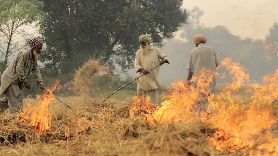 Farmers Set to Continue Burning Stubble; Delhi NCR May Choke Again