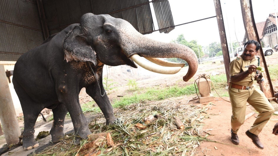 As per government records, 325 people and 70 elephants lost their lives in the last five years, with an average of 65 humans and 14 elephants per annum.