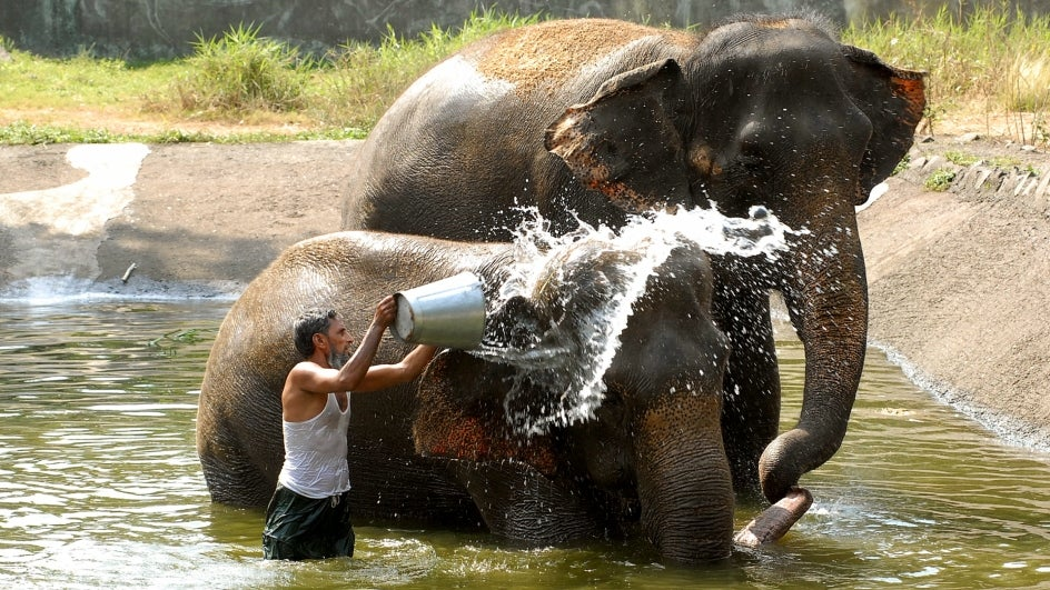 Zoos in Lucknow, Kanpur Install Water Coolers to Protect Animals from Heat Waves