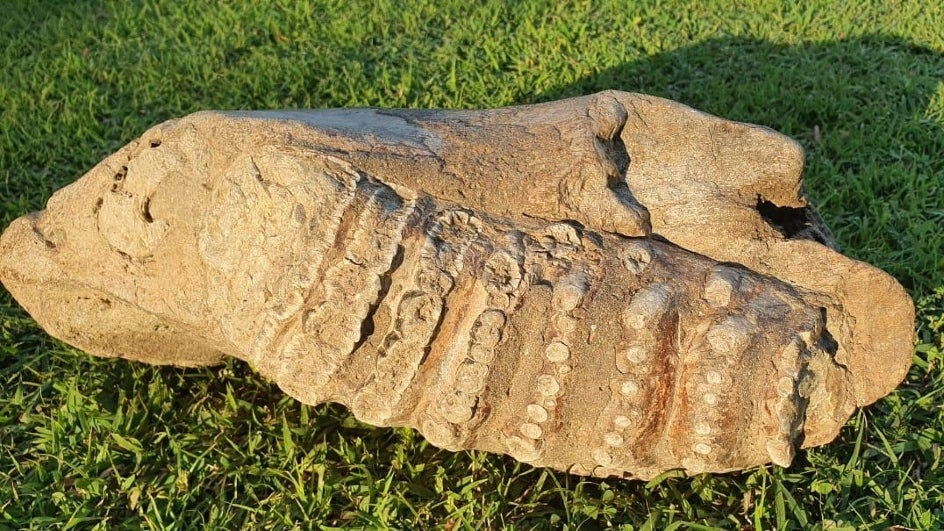 Officials Discover 5 Million-Year-Old Elephant Fossils in Forests Near Dehradun