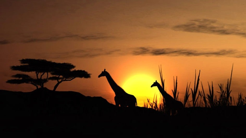 When Rhinos, Giraffes Walked the Green Expanse of the Kutch