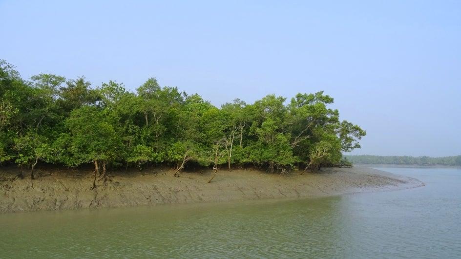 How Bio-restoration Is Helping Revive Degraded Mangroves in Sundarbans