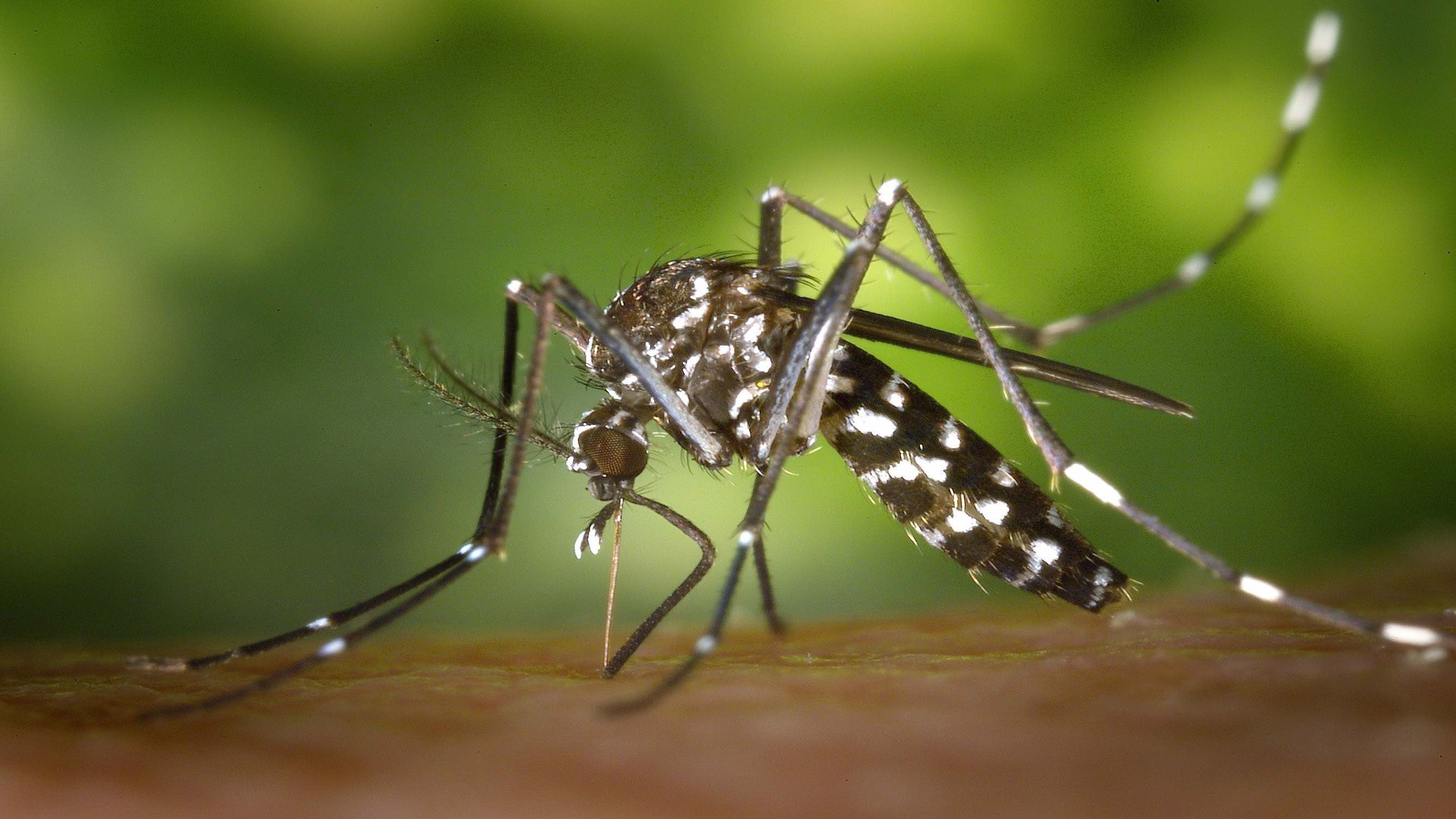 Global Warming, Climate Change Adding Sting to Mosquito Bites