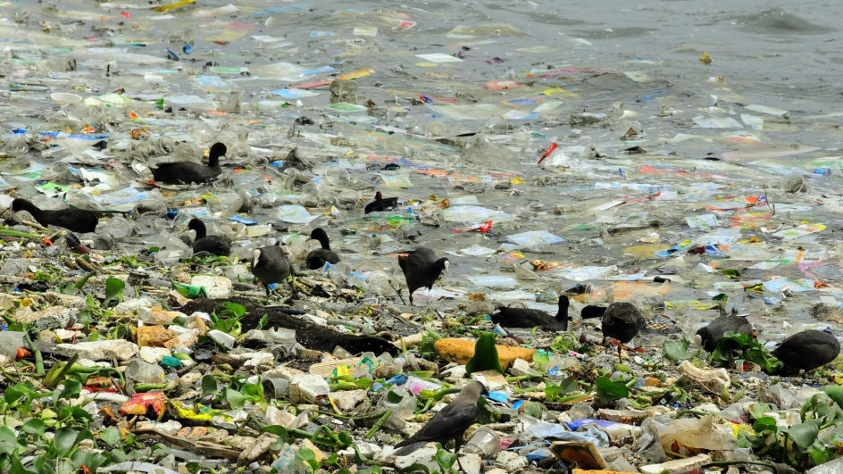 Scientists have found that Fungi could be the answer to one of the biggest environmental problems – plastic pollution.