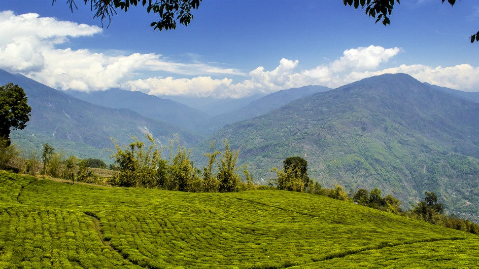 Sikkim to Get '100% Organic State' UN Award in Rome