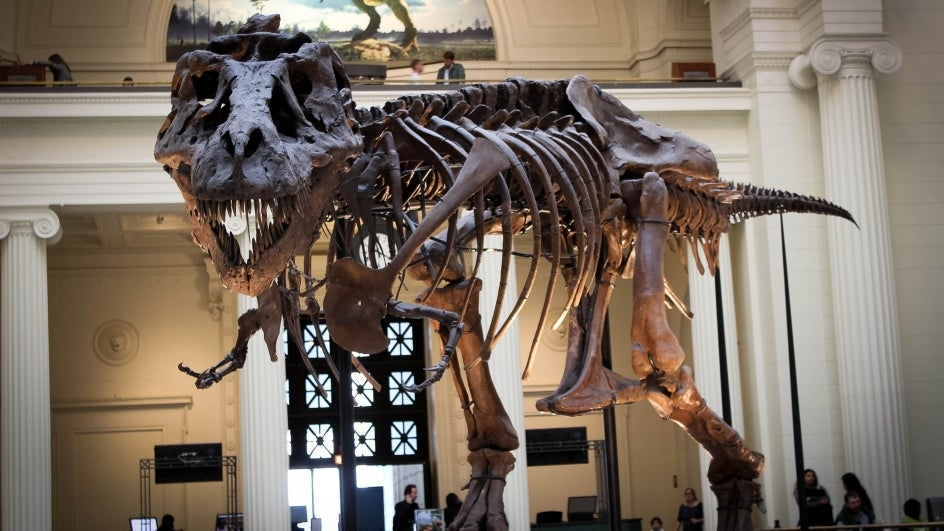 T-Rex Had Air-Conditioning System in Its Head: Study