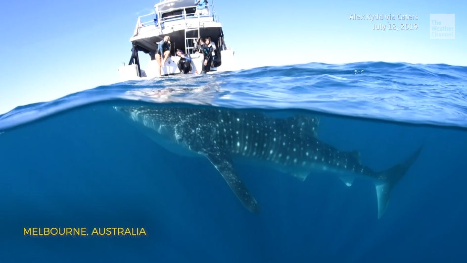 This beautiful underwater footage was shot in Melbourne, Australia.