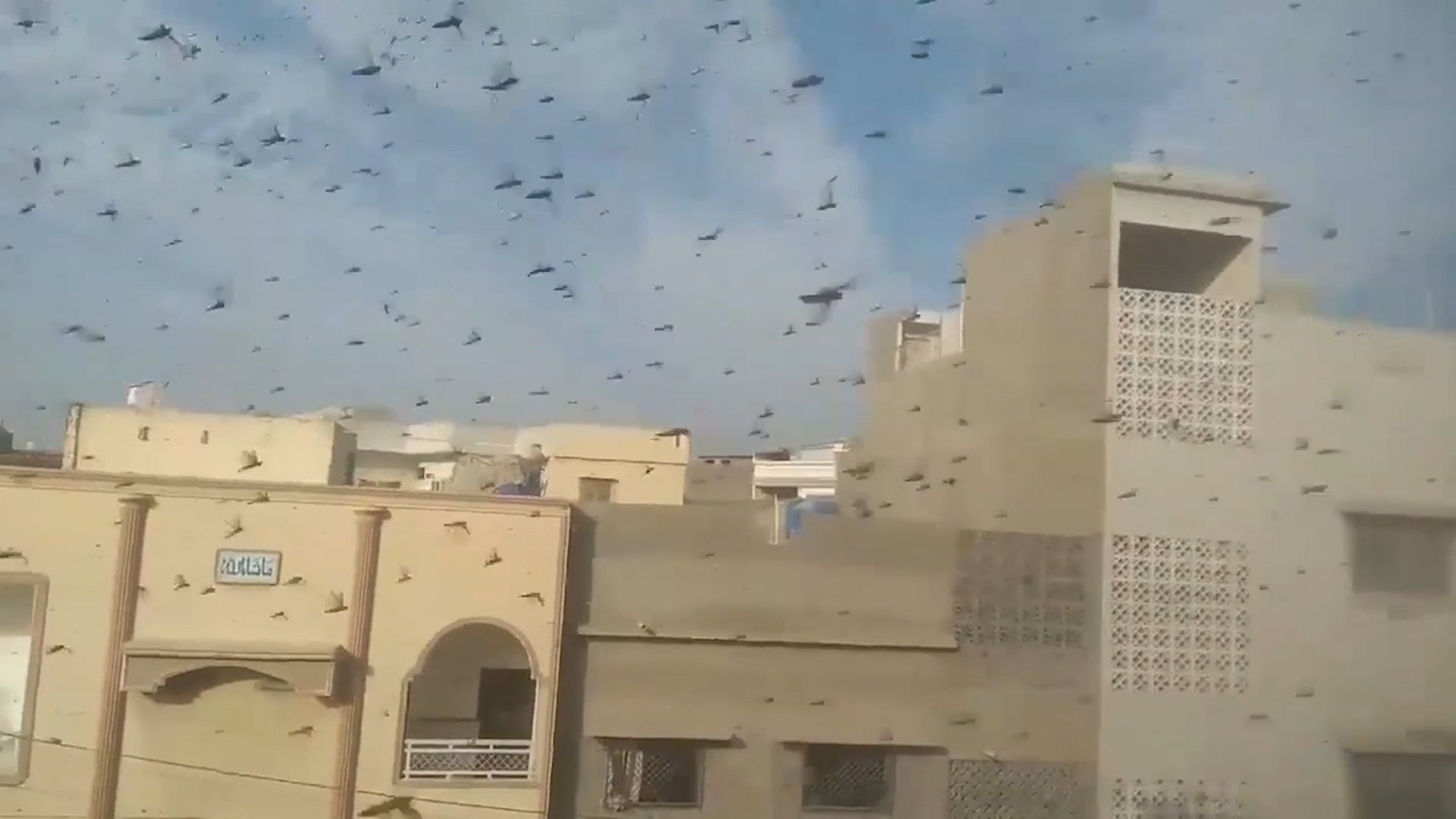 Huge swarms of the insects have descended near Karachi as they make their way from their breeding grounds to the coast.