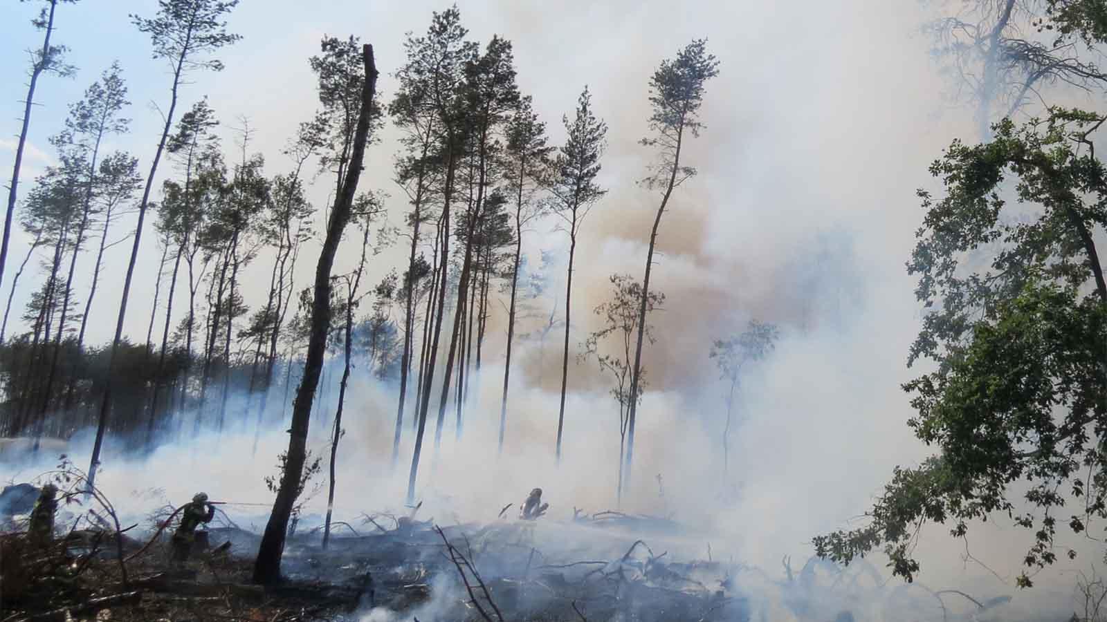 Mann will Unkraut vernichten und zerstört ein Waldstück so groß wie 2 Fußballfelder