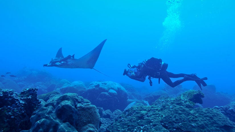 First Known Manta Ray Nursery Discovered Off Texas in the Gulf of Mexico, Study Says