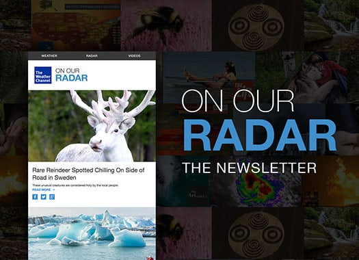 The Weather Channels Content Newsletter Examples