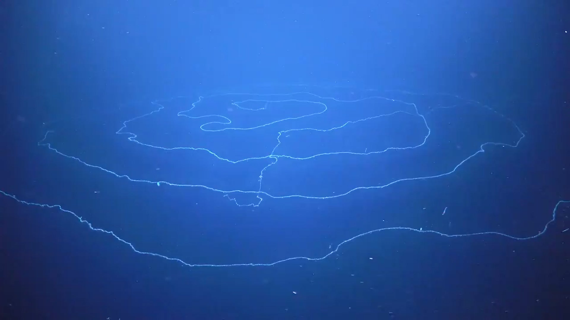 Giant Ocean Spirals a Rare Sea Creature Off Coast of Australia ...