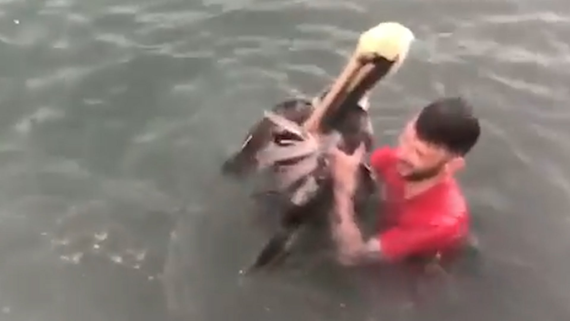 Man Tackles Pelican in Florida Keys, Faces Charges