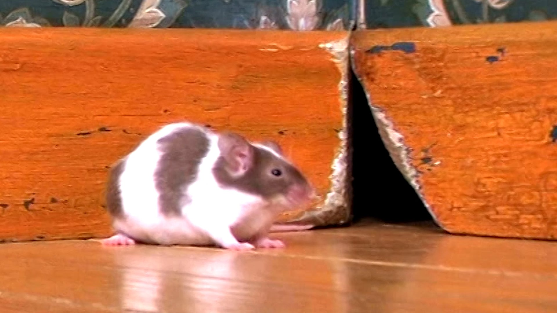 How To Protect Your Home From Pests and Animals