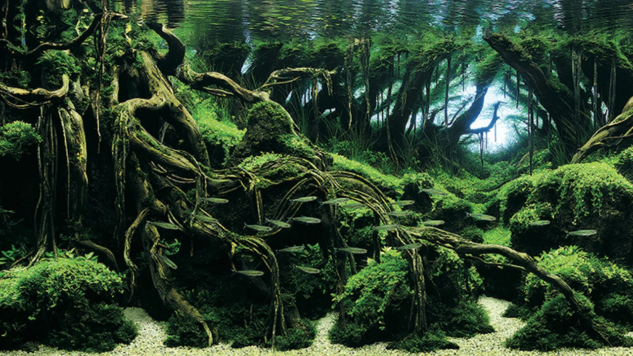27 Amazing Underwater Forests Photos The Weather Channel Articles From The Weather Channel Weather Com
