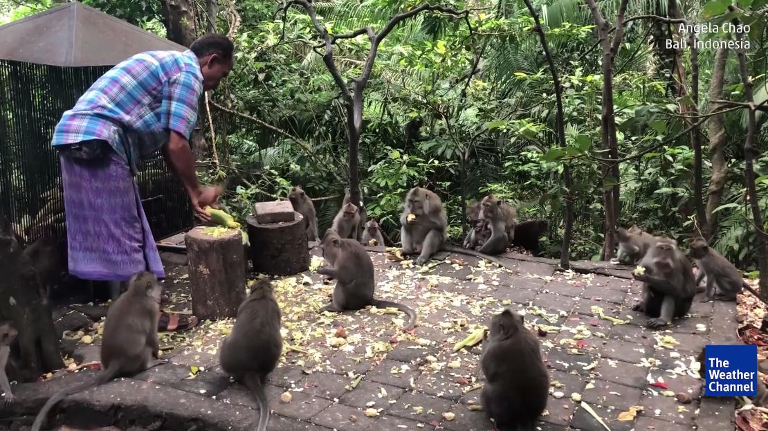 Neste santuário pode passar o dia com 700 macacos