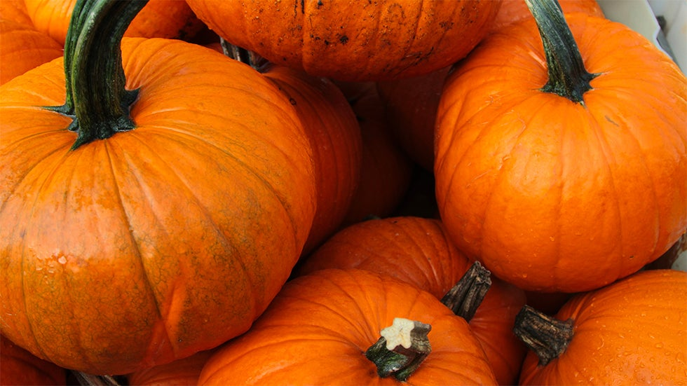 Will There Be a Pumpkin Shortage This Season?