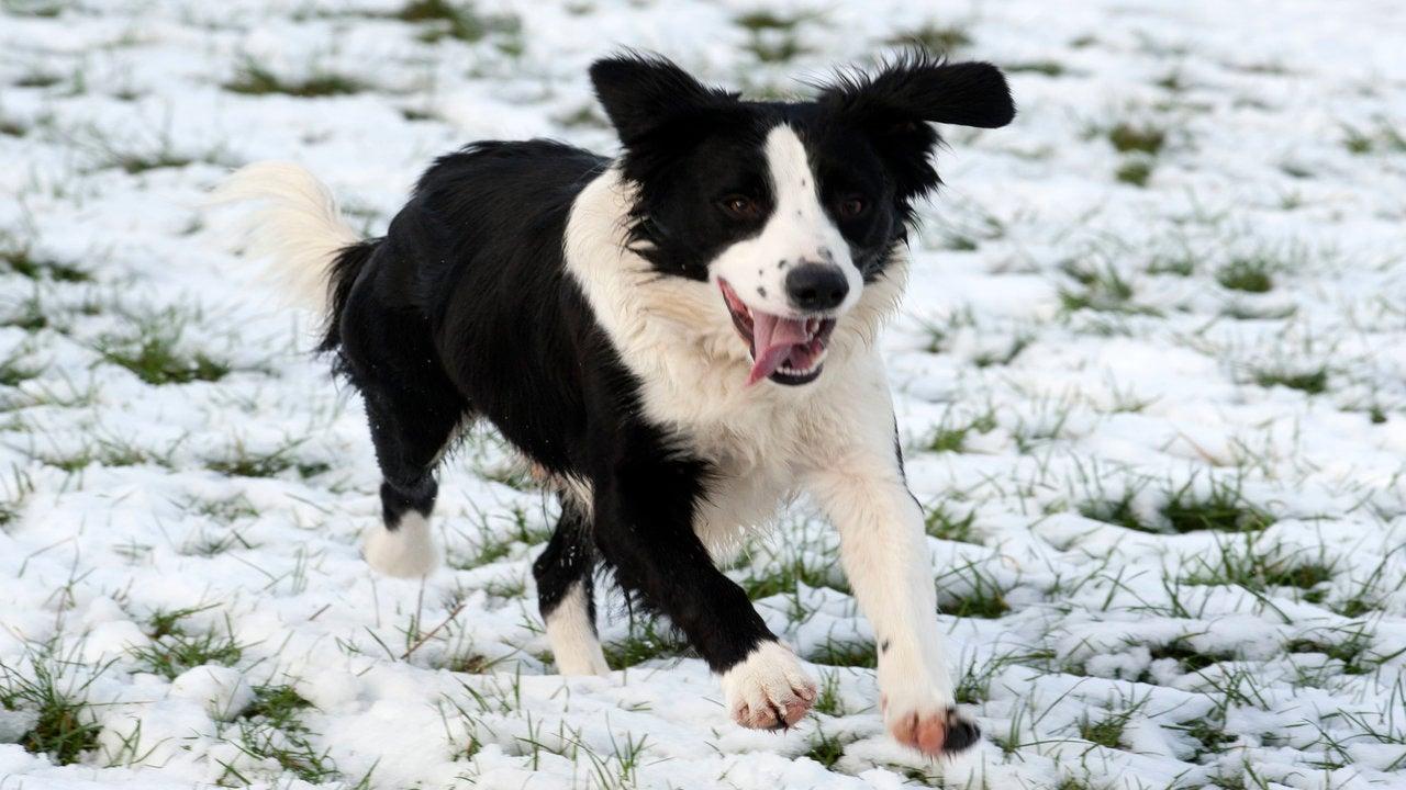 Vets warn of festive food treats 'danger' to dogs