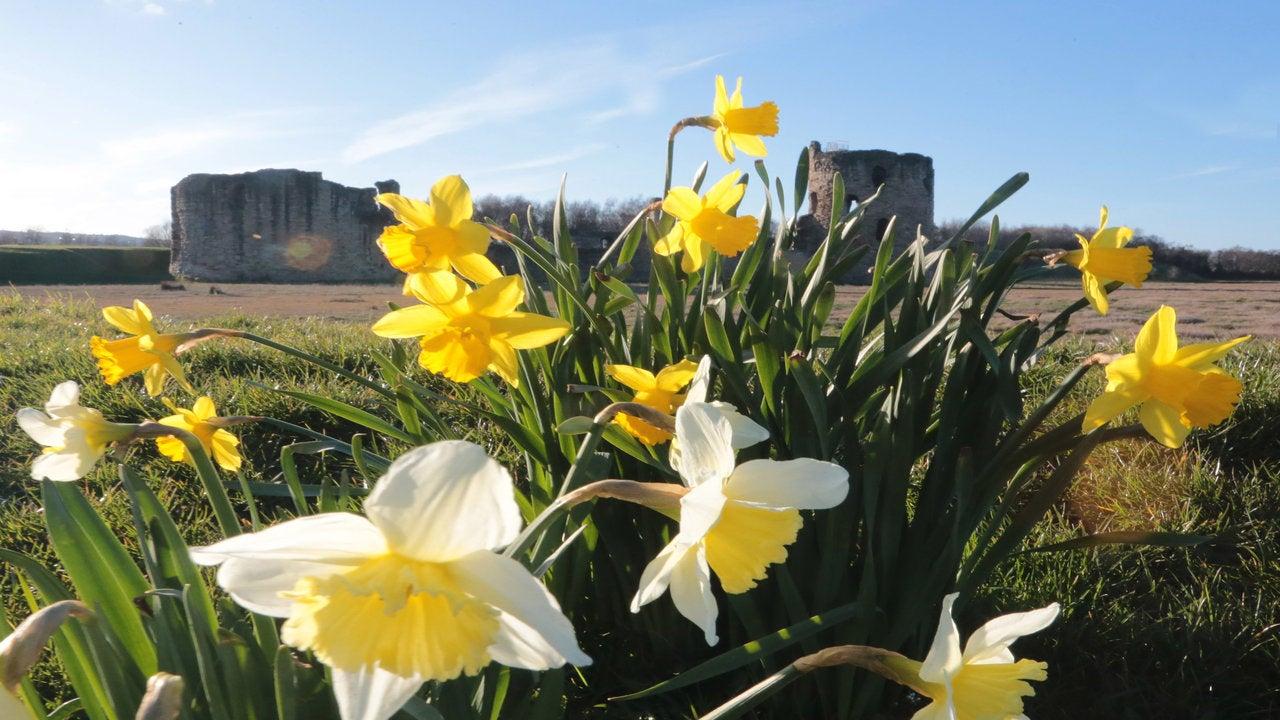 Hay fever alert with pollen levels soaring