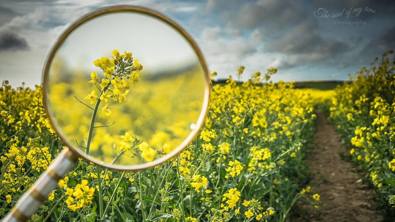 Magnifying Spring with Zoltan Attila Kecskes (PHOTOS)